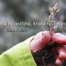 Dôvera je rastlina, ktorá rastie pomaly.