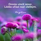 Omnia vincit amor. <br />(Láska víťazí nad všetkým.)