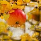 Plody dozrievajú vďaka slnku, ľudia vďaka láske.