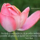 Na láske je najkrajšie to, že ju nikto nedokáže vysvetliť, ale predsa ju každý tak nádherne chápe.
