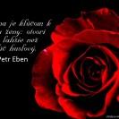 Kvetina je kľúčom k srdcu ženy: otvorí ho ľahšie než kľúč husľový.