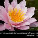 Múdry muž ma varoval, že život je len kvapkou rosy na lotosovom liste.